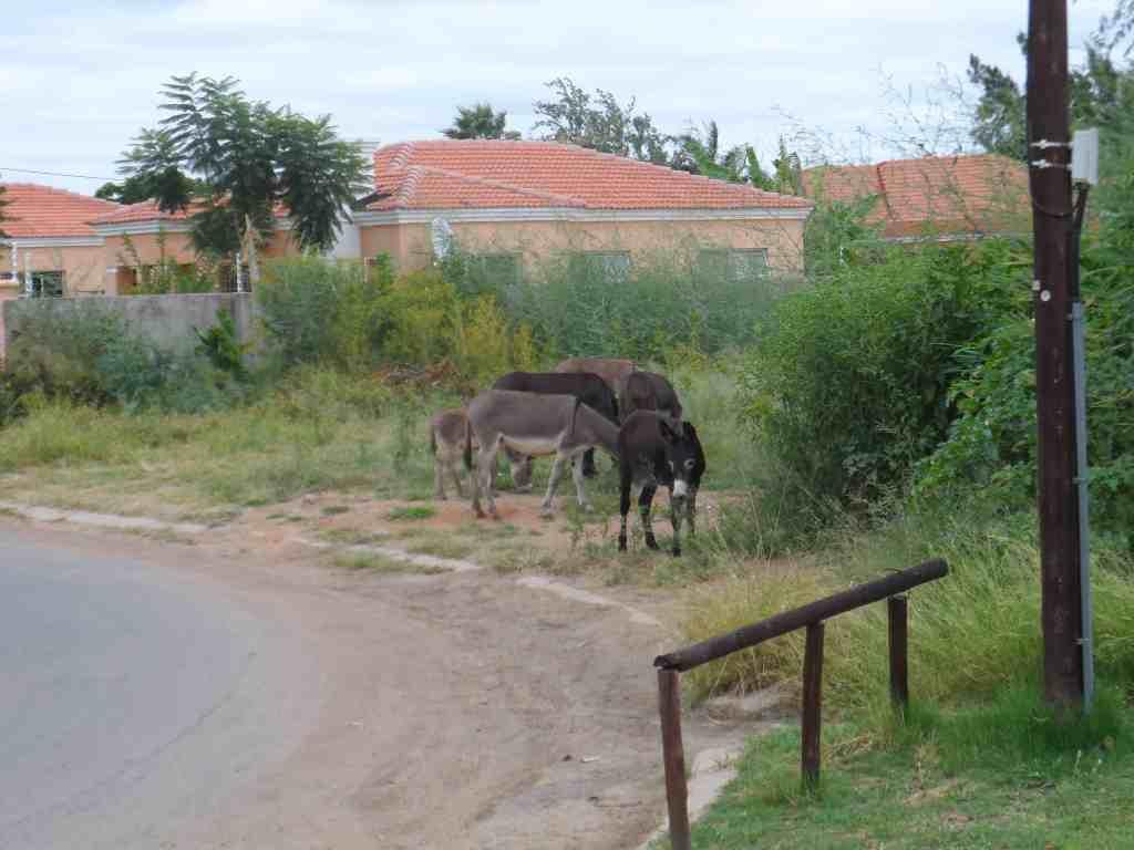 Donkeys and birds - lige udenfor min dør