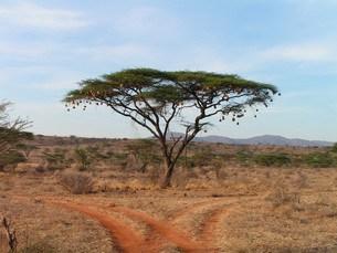 Botswana - fritidsaktiviteter og lidt om krokodiller