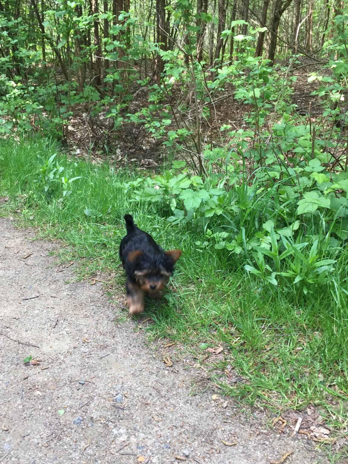 Skibshunden Bobo vokser og bliver så fræk:-)