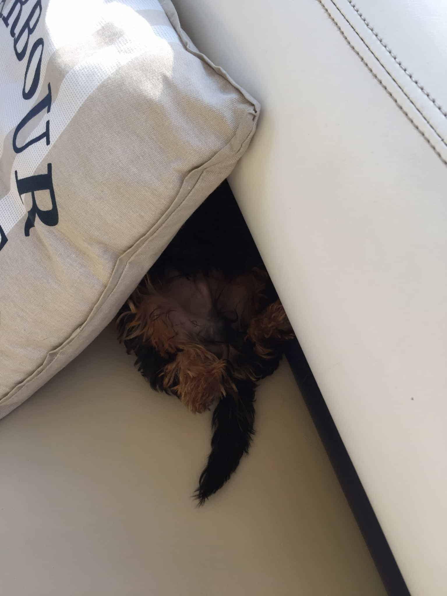 En Skibshunds dagbog - 4.