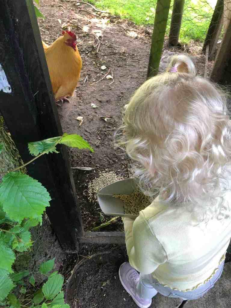 leonora fodrer hønsebasserne