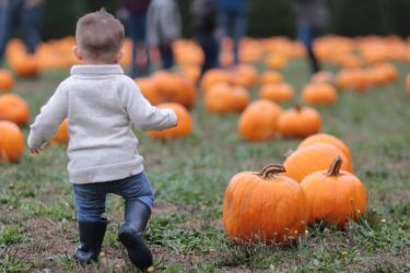 Young Toddler Running Away from Camera Towards Pumpkin Patch