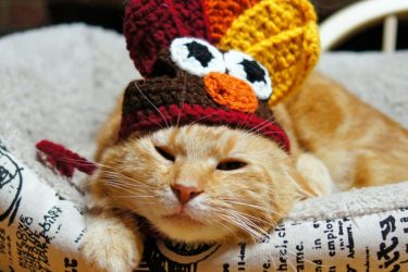 Calico cat sitting on cat bad with a knit turkey hat on its head.