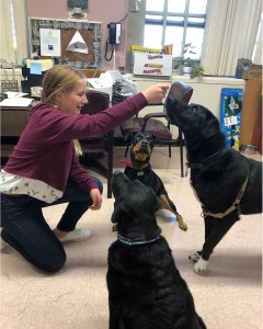Student holding treat over the noses of three dogs at J.H.S. 14.