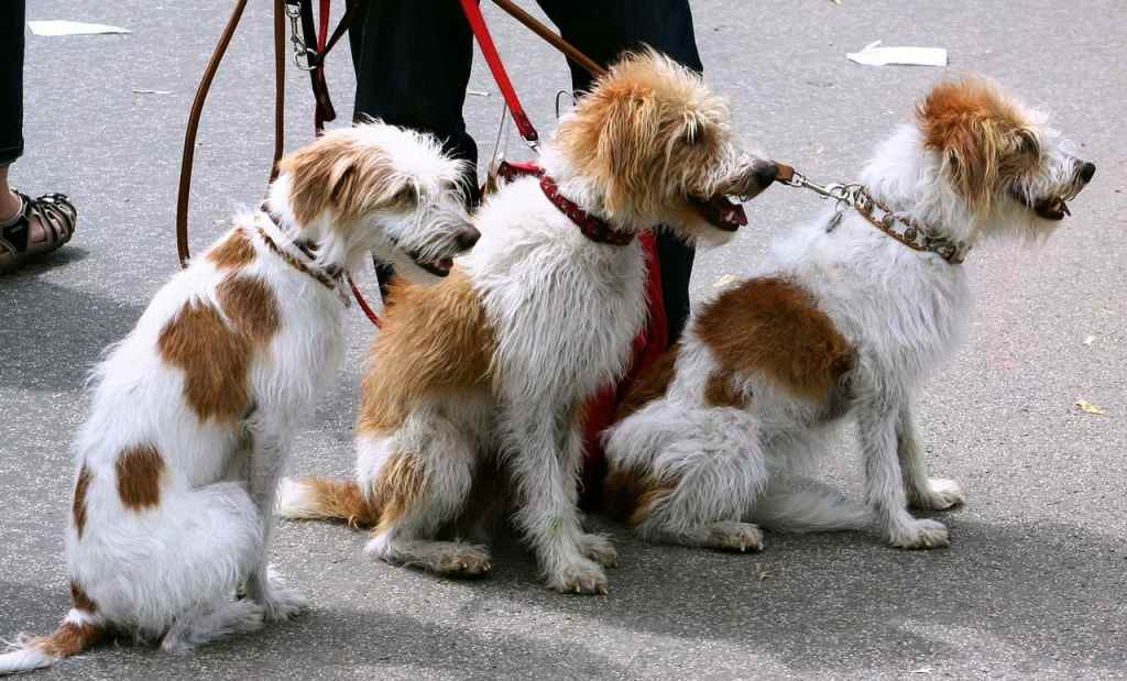 Turning Pet Passion Into Business Brawn