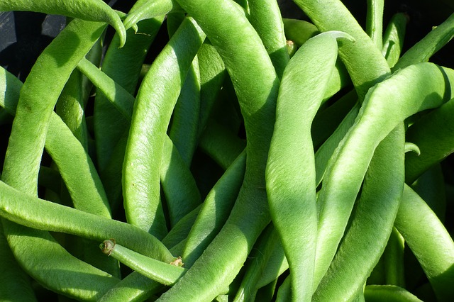 Pole Beans for small gardens