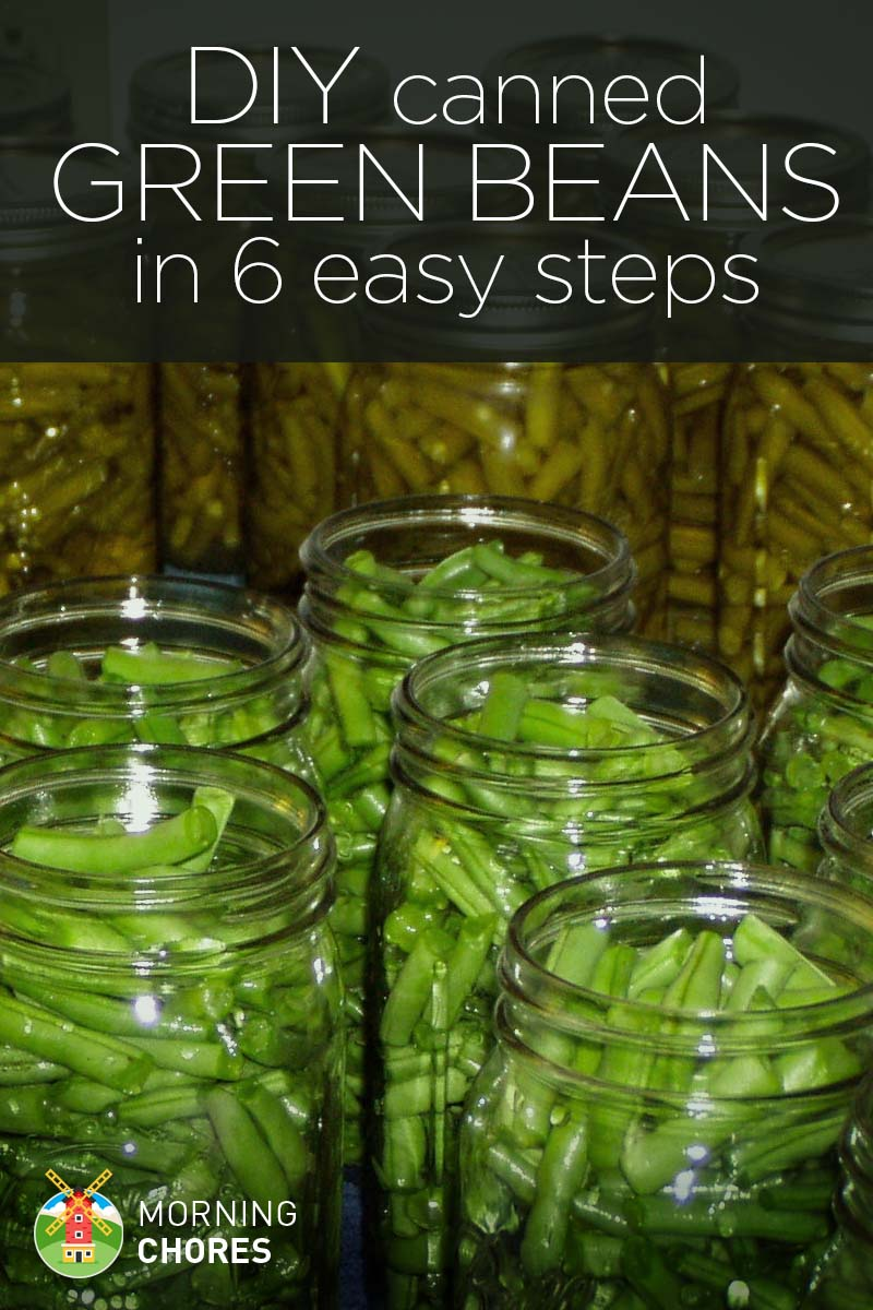 How to Can Your Green Beans in 6 Easy Steps
