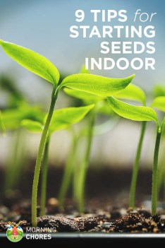 9 Indoor Seed Starting Tips