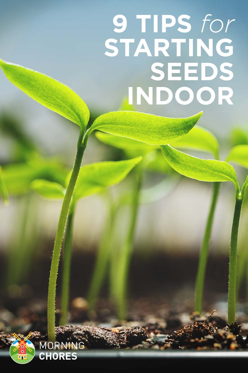 9 Tips for Starting Your Seeds Indoor (and Avoid Common Mistakes)