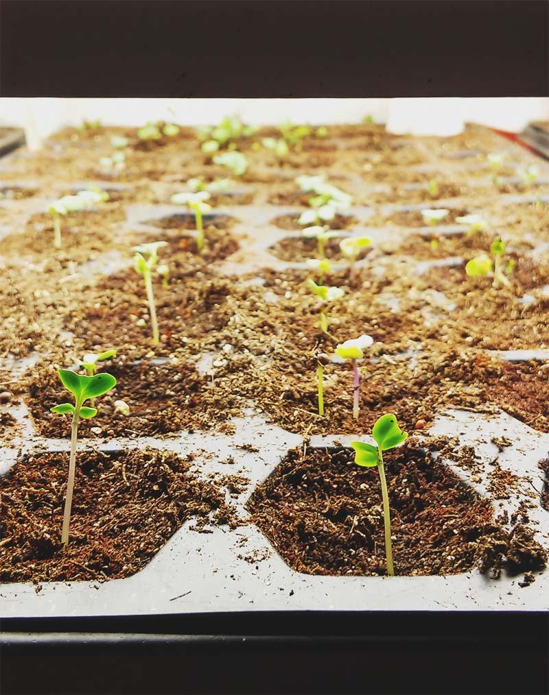 Seeds from MI Garden