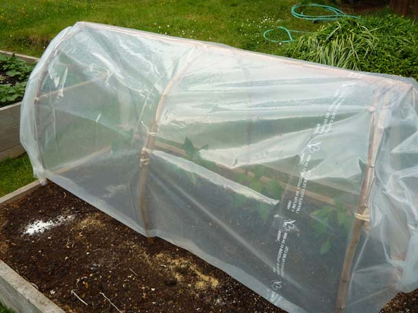 this is a very natural and original design for a cold frame greenhouse to protect seedlings