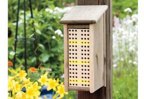 bee hive 22