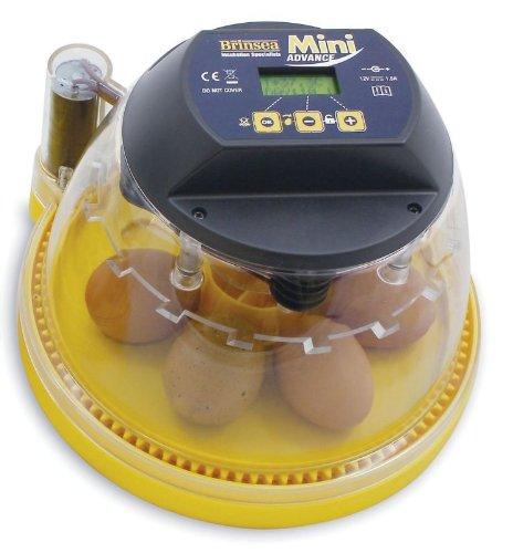 Raising egg chicken Foto