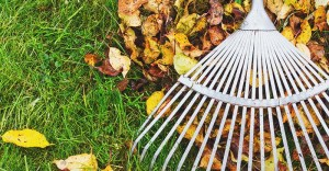 5 Best Leaf Rake for Your Garden and Lawn – Reviews & Buying Guide