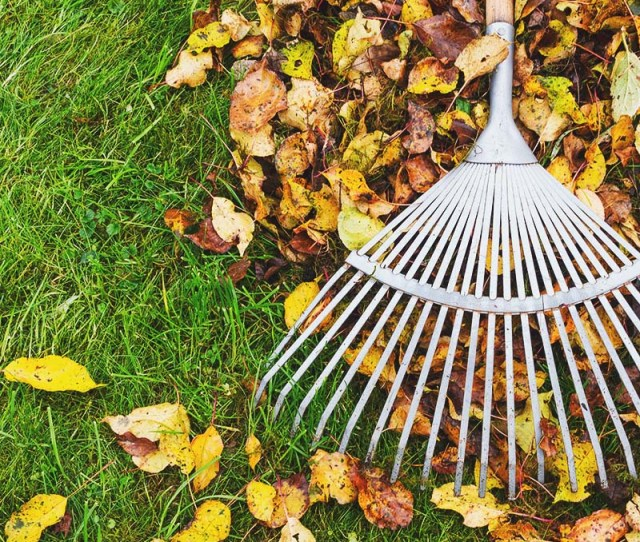 5 Best Leaf Rake For Your Garden And Lawn Reviews Buying Guide