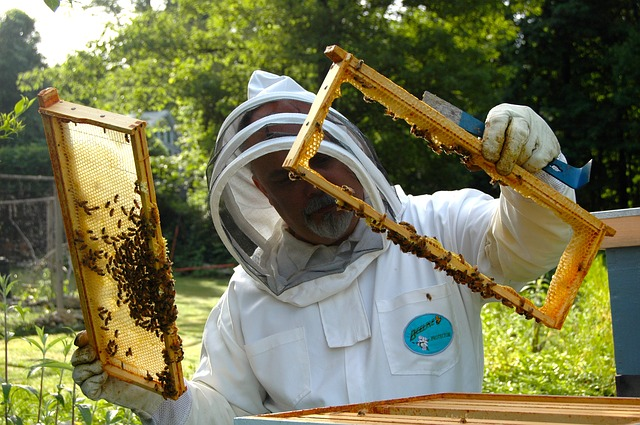 Beekeeper in a suit
