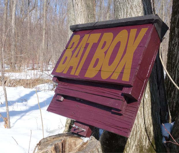 This Bat Box Is Made From Reclaimed Pallet Wood. If You Have Any Small  Business Around You Or Even A Business That Gets A Lot Of Freight  Delivered, ...