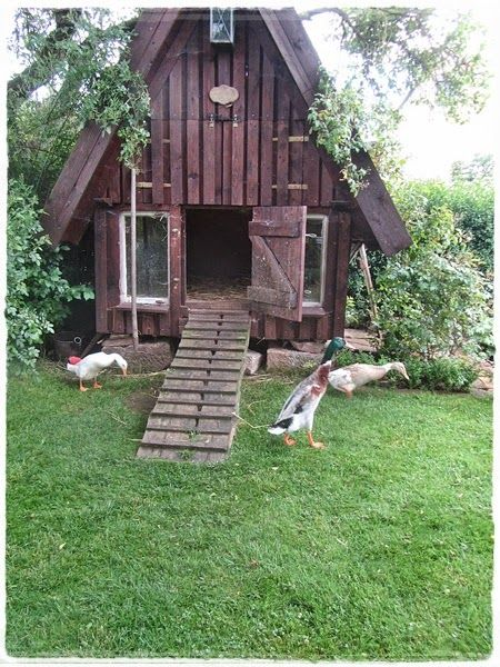 37 Free Diy Duck House Coop Plans Amp Ideas That You Can Easily Build