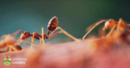 5 Best Outdoor & Indoor Ant Killer Reviews That Are Safe to Use