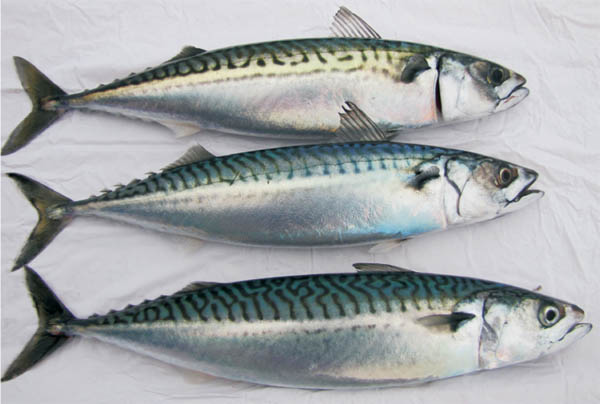 14 healthiest best fish to eat and 7 to absolutely for Best type of fish to eat