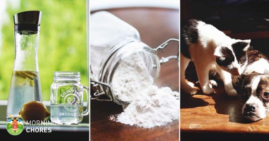 39 Awesome Diatomaceous Earth Uses That You Will Want to Try Daily