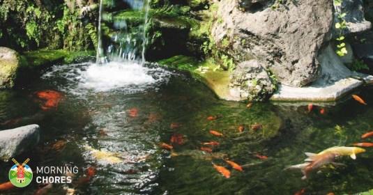 5 Best Pond Skimmer Reviews For A Complete Pond Filtration System