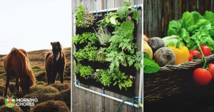 16 Ways to Grow All of Your Livestock's Food and Save Even More Money