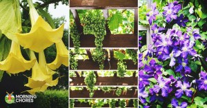 26 Trellis Plants That Are Bright, Charming, and Absolutely Gorgeous