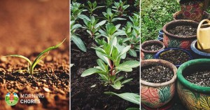 9 Tips for Better Soil Quality in Your Garden and Get Better Crops