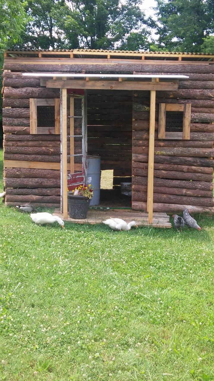 how we built our charming log cabin coop in 11 steps with only 100