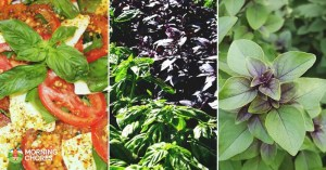 21 Types of Basil That Are Beautiful, Flavorful, and Utterly Delicious