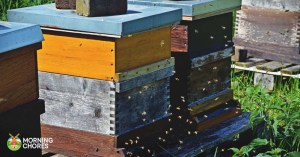 5 Easy Tips to Stop a Hot Hive and Why I Don't Embrace Hot Hives