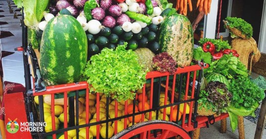 6 Tips to Monetize Your Homestead and Make Profit From the Farm