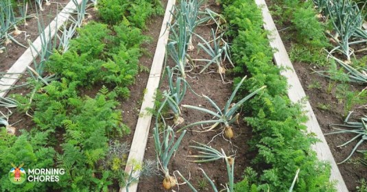 13 Companion Planting for Popular Vegetables to Make a Great Harvest