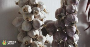 How to Store Garlic in 7 Unique Ways (and 5 Delicious Recipes to Try)