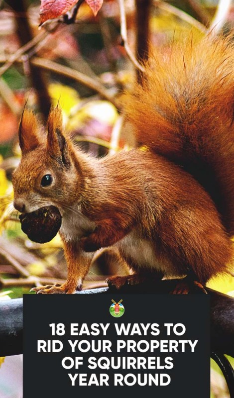 18 Easy Ways To Get Rid Of Squirrels From Your Property Year Round