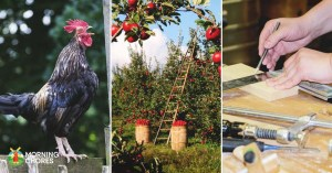 10 Perfect New Year Resolutions for Every Homesteader