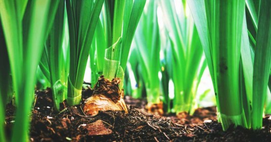 How to Grow Onions from Seed in 7 Easy-to-Follow Steps