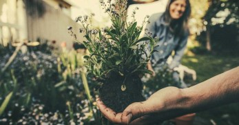 12 Steps to Choosing the Best Location for Your Vegetable Garden