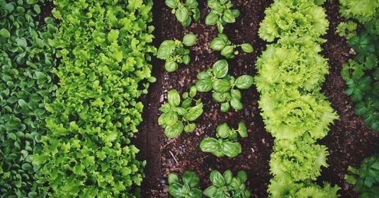 Starting a Vegetable Garden: A Comprehensive Beginner's Guide
