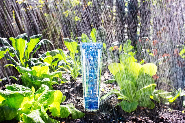 Watering Your Plants How Often When To Do It And 10 Things To Know