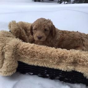 Magic of Snow - Six Weeks - Blizzard Basket Head Up