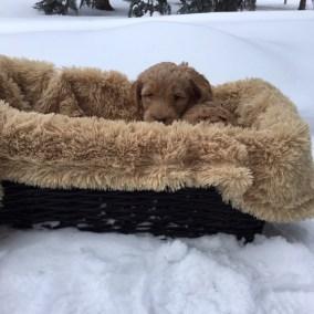 Magic of Snow - Six Weeks - Blizzard Basket