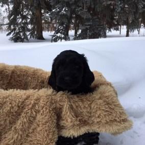 Magic of Snow - Six Weeks - Neve Basket