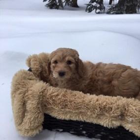 Magic of Snow - Six Weeks - Powder Basket