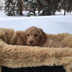 Magic of Snow - Six Weeks - Tundra Basket