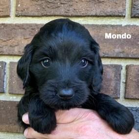 Mondo 4 Weeks