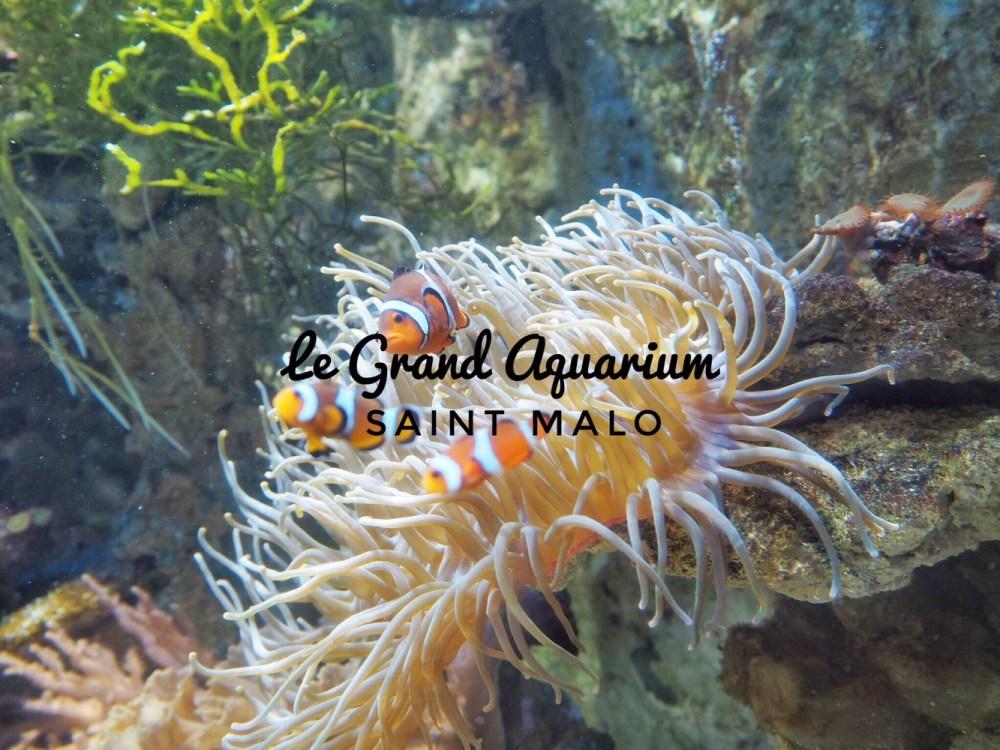 Visite guidé de l'Aquarium de Saint Malo.