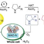 可視光レドックス触媒と酵素の協働による不斉還元:Cyclic Reaction Network