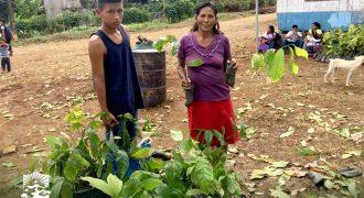 Fortalecimiento a la producción de cacao en Taisha.